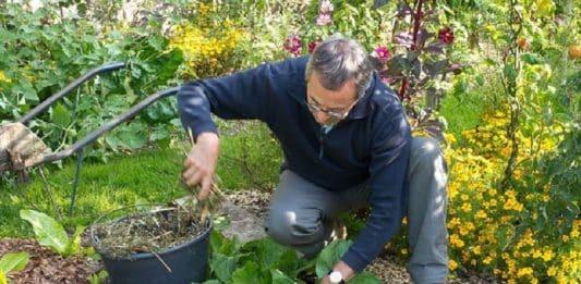 Que planter en octobre légume ou fruit