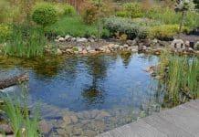 bassin aquatique